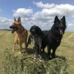 dog walking on salisbury plain