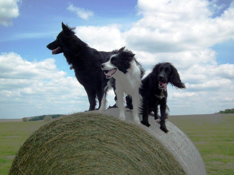 daily dog walk Wiltshire