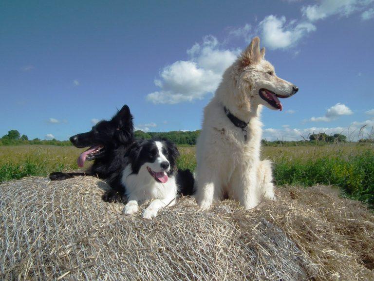 dog walking in Wiltshire