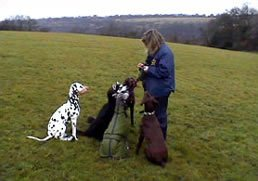 Karen in charge of the pack